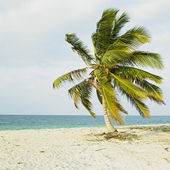 Cayo Sabinal, Camaguey Province, Cuba — Stock Photo