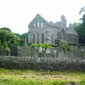 Ruins of Grey Abbey, Northern Ireland — Stock Photo
