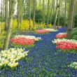 Keukenhof Gardens, Lisse, Netherlands — Stock Photo #10990332