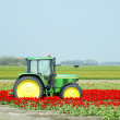 Tractor on the tulip field, Netherlands — ストック写真