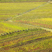 Vineyards in Velke Bilovice region, Czech Republic — Stock Photo