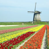 Windmill with tulip field near Schermerhorn, Netherlands — Stock Photo