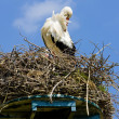 Stock Photo: Stork, Netherlands