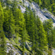 Stock Photo: Forest, Slovakia