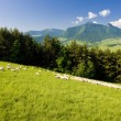 Sheep herd, Mala Fatra, Slovakia — Stock Photo #11283200
