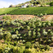 Stock Photo: Douro Valley, Portugal