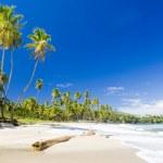 cumana bay, trinidad — Stok fotoğraf