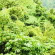 Inland of Grenada, Caribbean - Stock Photo