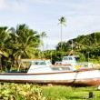 Fishing boats, Skeete's Bay, Barbados — Stock Photo