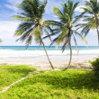 Green Point, Eastern coast of Barbados, Caribbean — Stock Photo