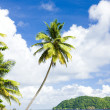Batteaux Bay, Tobago — Stock Photo #11287260