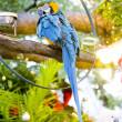Parrot, Key West, Florida Keys, Florida, USA — Stock Photo