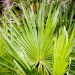 Vegetation in Everglades National Park, Florida, USA — Stock Photo