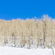 Stock Photo: Winter fores, Utah, USA