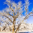 Stock Photo: Winter trees, Utah, USA