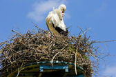 Stork, Netherlands — Photo