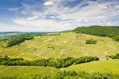 Vineyards near Chateau Chalon, Département Jura, Franche-Comté, — Stock Photo