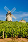 Vineyards with windmill near Chénas, Beaujolais, Burgundy, Franc — Stock Photo