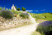 Grand cru vineyard and Chapel of St. Christopher, L´Hermitage, R — Stock Photo