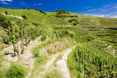 Grand cru vineyard, L'Hermitage, Rhone-Alpes, France — Stock Photo