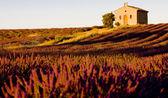 şapel ile lavanta alan, plato de valensole, provence, fran — Stok fotoğraf