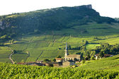 Vergisson with vineyards, Burgundy, France — Stock Photo