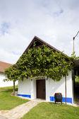 Wine cellar, Blatnice pod svatym Antoninkem, Czech Republic — Stock Photo