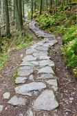 Path in Vysoke Tatry (High Tatras), Slovakia — Stock Photo