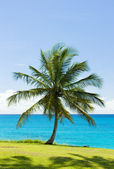 Palm tree and Caribbean Sea, Barbados — Stock Photo