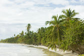 Beach on Tobago Island — Stock Photo