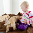 Little girl playing with puppies of golden retriever - Stock Photo