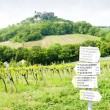 Ruins of Falkenstein Castle with vineyard, Lower Austria, Austri — Stock Photo