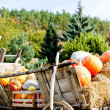 Still life of pumpkins on cart - Stok fotoğraf