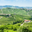 Vineyars near Barbaresco, Piedmont, Italy - Foto de Stock