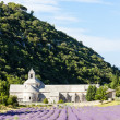 Senanque abbey with lavender field, Provence, France — Stock Photo #11291307