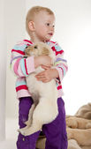 Little girl playing with puppy of golden retriever — Stock Photo