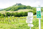 Ruins of Falkenstein Castle with vineyard, Lower Austria, Austri — Stock Photo