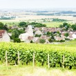 Grand cru vineyard near Fixin, Cote de Nuits, Burgundy, France — Lizenzfreies Foto