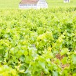 Vineyards near Gevrey-Chambertin, Cote de Nuits, Burgundy, Franc — Stock Photo #11423724