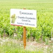 Grand cru vineyard of Chapelle-Chambertin, Cote de Nuits, Burgun - Stock Photo