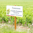 Grand cru vineyard of Chapelle-Chambertin, Cote de Nuits, Burgun — Stock Photo #11423728
