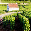 Vineyards near Gevrey-Chambertin, Cote de Nuits, Burgundy, Franc - Stock Photo