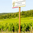 Grand cru vineyards Chambertin, Burgundy, France - Stock Photo