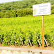 Grand cru vineyards Chambertin, Burgundy, France — Stock Photo