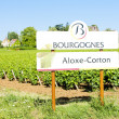 Stock Photo: Vineyards of Aloxe-Corton, Burgundy, France