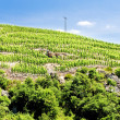 Grand cru vineyard, Cote Rotie, Rhone-Alpes, France — Stock Photo #11423817