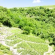 Vineyards of Cote Rotie, Rhone-Alpes, France — Stock Photo #11423843