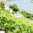 Vineyard of Chateau Grillet, Rhone-Alpes, France - Stock Photo