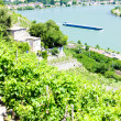 Vineyard of Chateau Grillet, Rhone-Alpes, France — Stock Photo #11423866