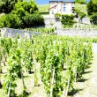 Vineyard of Chateau Grillet, Rhone-Alpes, France - Foto Stock